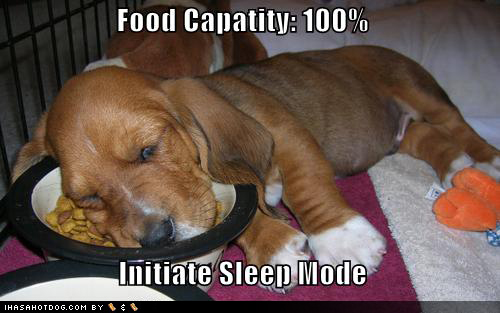 Cute puppy pictures sleep